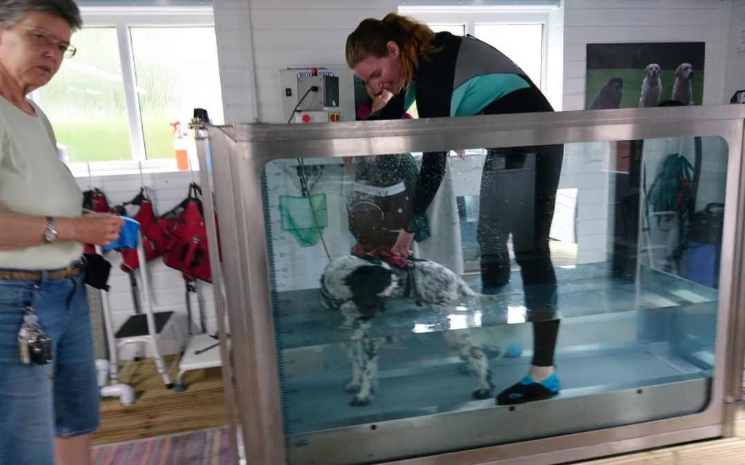 Ceri's Hydrotherapy treadmill training