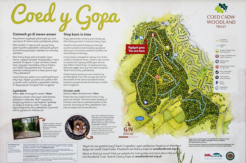 Coed y Gopa (10)