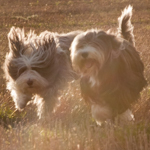 Sally, BiBi and their humans – Lizzie & Chris
