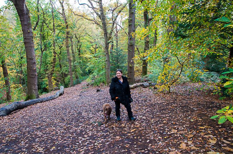 Pwllycrochan Woods