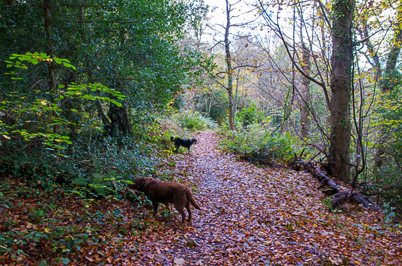Dog Friendly Walk Pwllycrochan Woods