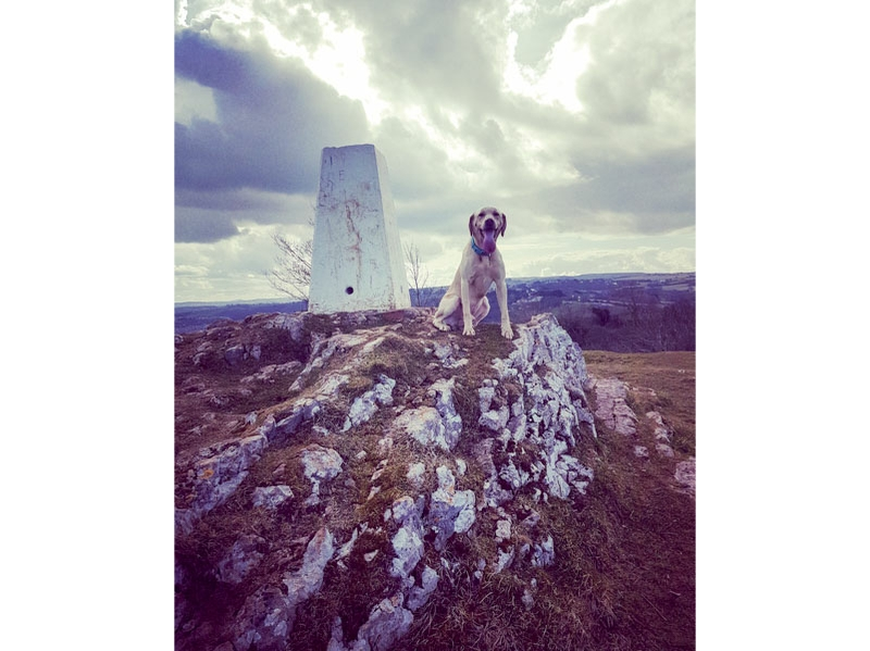 Bryn Euryn dog friendly walk